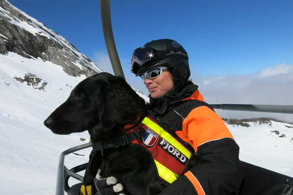 avalanche ski dog