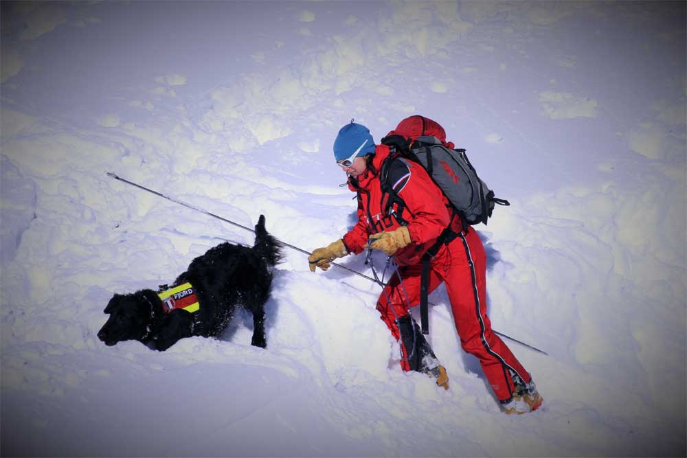 ski avalanche dog