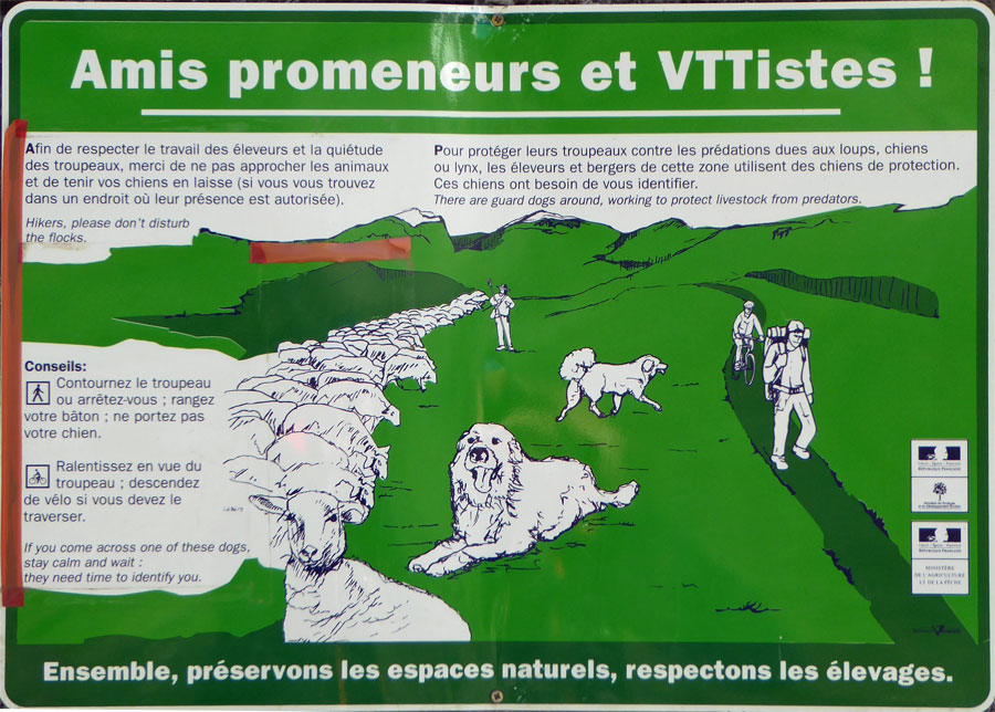 Patour protecting sheep from wolves can be a threat to walkers
